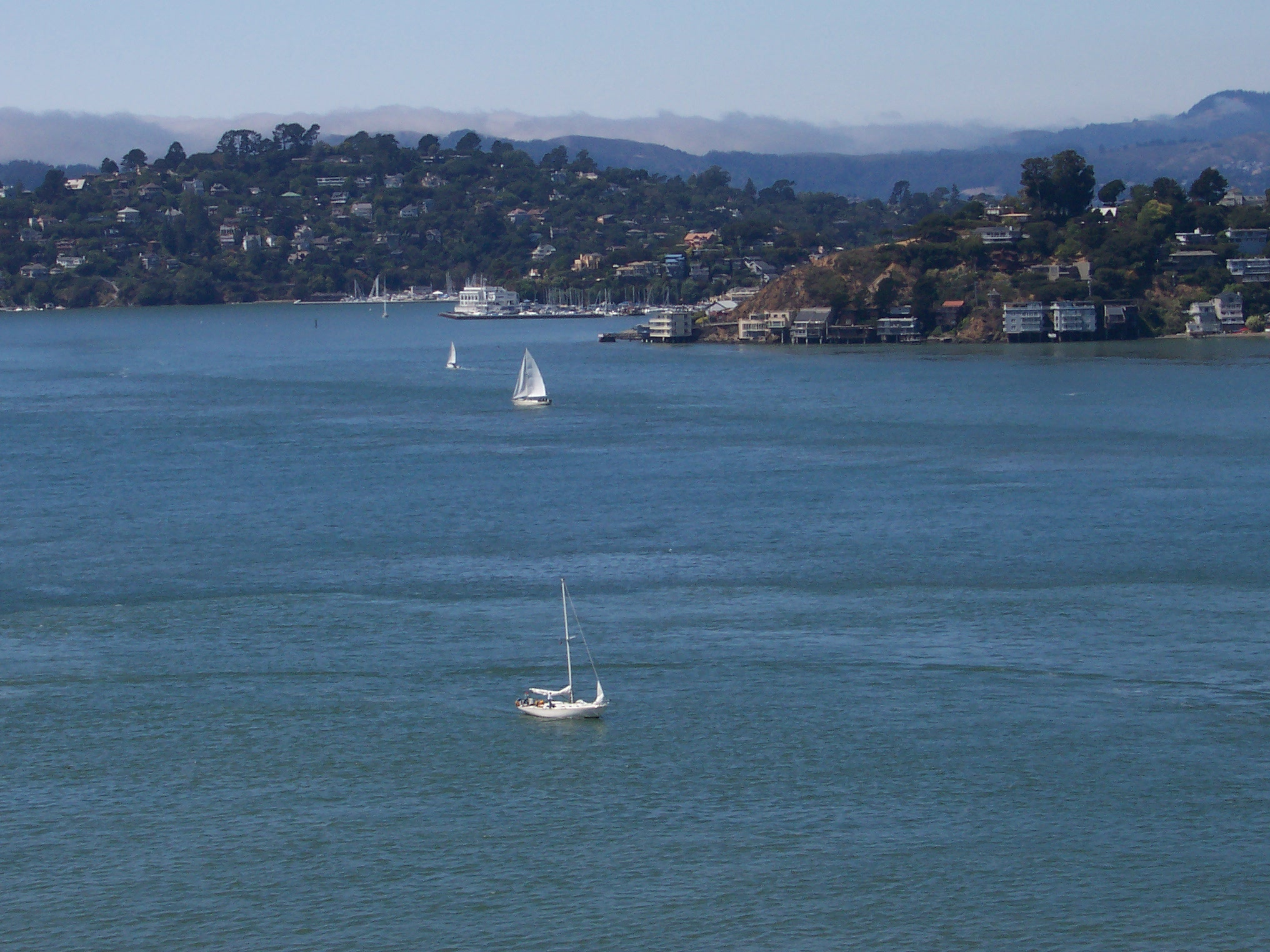Tiburon from Angel Island (photo by Patricia A Leslie, artist / author)