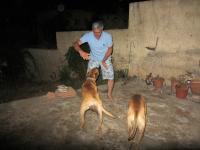 Asad Safari's picture