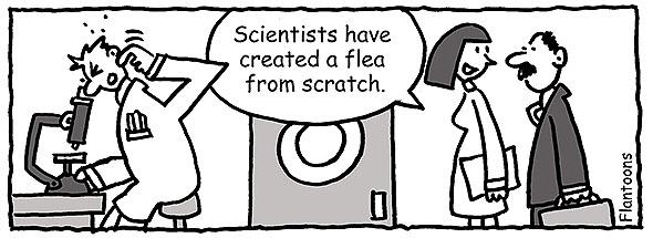 scratch idiom